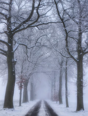 All in white (juliendumont2) Tags: tree trees branch road treetrunk countryside rural snow fog weather winter season outdoors noperson nature mothernature landscape white canon belgium inexplore greenscene fineart