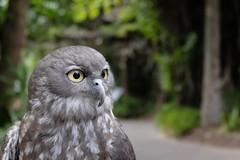 Uil (Marijke-s) Tags: nature xt10 fujifilmxt10 fujifilm bird uil