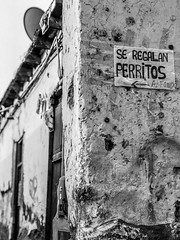 Scenes from Lima (AntoinePound) Tags: calle barriosaltos peru lima dog perro