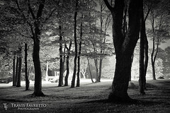 Urban Forest (tfavretto) Tags: algoma backlight backlit bw desaturated forest grass lawn leaves lights lurking monochrome park road saultstemarie shadows trees urban bellevuepark