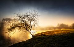 Pontevea (Noel F.) Tags: pontevea teo estrada rio ulla galiza galicia neboa fog mist mencer sunrise leica m 240 m240 voigtlander 15 iii vm