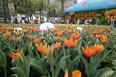 hong kong flower exhibition 2019  shot use canon 5d with Carl Zeiss Jena Flektogon 20mm f4  Q 1 Copy of IMG_9800 (lhchan1) Tags: hong kong flower exhibition 2019 shot use canon 5d with carl zeiss jena flektogon 20mm f4 q 1