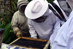 DSC_9766-61 (jjldickinson) Tags: nikond3300 107d3300 nikon1855mmf3556gvriiafsdxnikkor promaster52mmdigitalhdprotectionfilter longbeach bixbyknolls longbeachbeekeepers outreach class beeprepared insect bee honeybee apismellifera hive hiveinspection dickbarnes