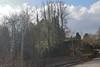 Auchenblae_Mar 19_851