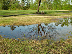 Flood Water Reflection. (dccradio) Tags: lumberton nc northcarolina robesoncounty outdoor outdoors outside nature natural park citypark raymondbpenningtonathleticcomplex penningtonathleticcomplex northeastpark april weekend saturday saturdaynight saturdayevening evening goodevening spring springtime hp hewlettpackard hpdsccb350 tree trees treebranch branch branches treebranches treelimb treelimbs sky eveningsky flood flooding floodwater floooded