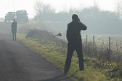 Robin and a shortie (Steve Balcombe) Tags: bird birdofprey shorteared owl asio flammeus inflight steart marshes somerset uk