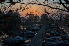 Round And Around We Go (pni) Tags: sunset sky sun water sea boat tree branch leaf evening pier taivallahti edesviken töölö tölö takatöölö bortretölö helsinki helsingfors finland suomi pekkanikrus skrubu pni