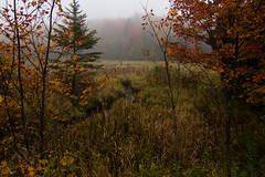 Colors In The Fog (Northern Wolf Photography) Tags: 14mm autumn em5 fall fog forest landscape statepark swamp trees woodford woods bennington vermont unitedstates us
