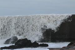 IMG_0544 (monika.carrie) Tags: monikacarrie wildlife scotland aberdeen waves