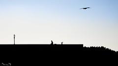Contraluces I (Jaime Martin Fotografia) Tags: asturias gijon contraluz nature silueta