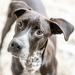 Albus18Jan201927.jpg (fredstrobel) Tags: dogs pawsatanta atlanta usa animals ga pets places pawsdogs decatur georgia unitedstates us