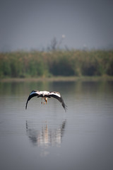 HoskoteBirding_Jan2019_D75_8467 (mgcs) Tags: birds indianbirds karnataka nikond750 nikkor200500 wild handheld