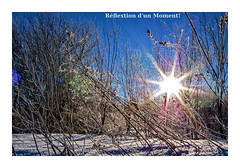 hot flare, cold day (jacqueshervieux) Tags: flare winter snow cold pentax pentaxart plant