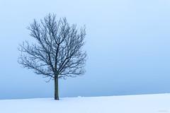 Snow Covered and Alone at Beach (kmanoh) Tags: america beach cold d810 eastboston ma massachusetts newengland nikon northamerica northeast revere reverebeach snow usa unitedstates winter