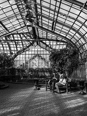 Newlyweds, sharing a phone moment (dharder9475) Tags: 2019 bw bench blackandwhite candid couple lgv30 lincolnparkconservatory men privpublic showroom sitting streetphotography
