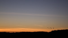 Birds (YasmineP) Tags: birds oiseaux sky ciel morning matin sunrise canon eos 7d canoneos7d five nature animals animaux belgium belgique silhouette vol fly