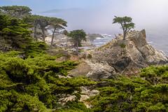 Lone Cypress (Snap Man) Tags: california montereycounty montereypeninsula byklk coast cypress fog ocean lonecypress montereycypress