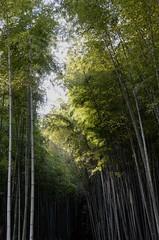 Arashiyama, Kyoto, Japan (Plan R) Tags: tree bamboo grove arashiyama kyoto nikon d7000