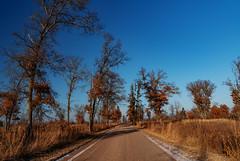 St. John's Road at Saint Croix State Park, Minnesota (Tony Webster) Tags: minnesota saintcroixstatepark saintjohnsroad stcroixstatepark stjohnsroad dirtroad road statepark trees winter
