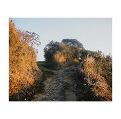 #0175 (Masami H.) Tags: 6x7 film analog mediumformat mamiya7ii kodak portra landscape