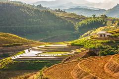 File370.0617.QL32.Hồ Bốn.Tân Uyên.Lai Châu (hoanglongphoto) Tags: asia asian vietnam northvietnam northwestvietnam landscape scenery vietnamlandscape vietnamscenery mountainouslandscape mountain afternoon sunlight sunny sunnyafternoon sunnyweather sierra flanksmountain hill hillside tophill terraces terracedfields sky hdr canon canoneos1dsmarkiii tâybắc laichâu tânuyên phongcảnh thiênnhiên buổichiều phongcảnhvùngnúi phongcảnhtâybắc núi sườnnúi đồi dãyđồi sườnđồi đỉnhđồi nắngchiều ruộngbậcthang bầutrời mây ql32 phúckhoa hồbốn northernvietnam bắcviệtnam mountainouslandscapeinvietnam sceneryterracedfieldsinvietnam canonef70200mmf28lisiiusm afternoonsunshine happyplanet asiafavorites
