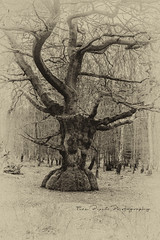 Antique Look.  Old Beech Tree, Epping Forest. (Fine Pixel Photography) Tags: beech tree nature epping forest nikon art london uk waltham abbey