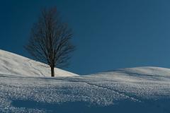Un arbre perdu dans la neige (christian.rey) Tags: gruyère hiver winter swiss suisse arbre tree snow neige traces sony alpha a7r2 a7rii 24105 paysage landscape prédelessert