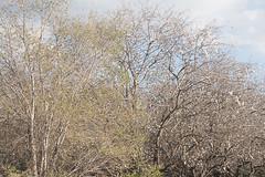 Primavera (Joaquim F. P.) Tags: natura joaquimfp tarragona flora almendros salou spain olmo sony alpha ilce 6300 a6300 mirrorless camera catalunya sel55210 zoom telezoom emount evil ilce6300 apsc sensor nex ilc milc bealpha països catalans cataluña catalonia europe turismo visit visitsalou livesalou