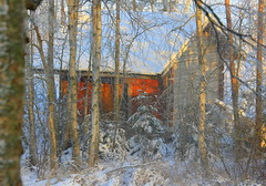 The old sauna-cottage. (irio.jyske) Tags: landscape lanscape landscapes landscapephotographer landscapephotos lakescape landscapepics landscapepic landscapephotograph naturepictures naturephoto naturephotograph nature naturepic naturescape naturephotos naturephotographer natural naturepics photographer photograph photos pic winter snow frost cold forest trees colors beautiful beauty