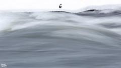 Admiring the waves (Stefan Gerrits aka vanbikkel) Tags: finland kuusamo canon5dmarkiii nature wildlife vanbikkel bird birds lintu winter talvi waterspreeuw dipper whitethroateddipper gewonewaterspreeuw koskikara cincluscinclus europeandipper canonef500mmf4lisiiusm