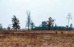 Saint Croix State Park, Minnesota (Tony Webster) Tags: minnesota saintcroixstatepark stcroixstatepark autumn fall statepark winter crosbytownship unitedstatesofamerica us
