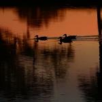 Sunset January 8th thumbnail