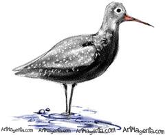 Spotted Redshank (Z0230) #bird #birding #drawings #birds #instagood #sketches #artwork #artist #illustration #artistoninstagram #animallovers #instadraw #draw #birdwatching #your_best_birds #sketchingdaily #visualdevelopment #illustrationartist #art_spotl (ArtMagenta) Tags: birds birding birdwatching birdpainting