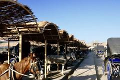 IMG_E0419 (Peter Chou Kee Liu) Tags: 2019 02 egypt west bank nile temples