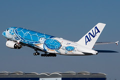 ANA A380 - Flying Honu (Martyn Cartledge / www.aspphotography.net) Tags: a380 aero aerodrome aeroplane air airbus aircraft airfield airline airliner airplane airport allnippon aspphotography avgeek avgeeks aviation cartledge civil civilairline civilairliner flight fly flying flyinghonu flywinglets iflya380 jet martyn plane runway toulouse transport wings wwwaspphotographynet wwwflywingletscom asp photography