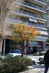 036A0485 (zet11) Tags: greece piraeus port marina yachts buildings sky water