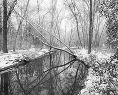 Meredith Branch Creek 1-14-2018 (adamwilliams4405) Tags: richmond rva richmondva creek nature outside explore canon landscapes snow winter weather white reflection blackandwhite bnw tones trees icy virginia va intimate