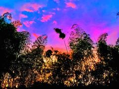 Coffee land beautiful sunset - Pereira Cerritos (EDUARDOZEA) Tags: coffee afternoon earth trees sky clouds wonder nice nature colors sunset