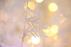 light (photos4dreams) Tags: frankfurt messe fair paper stationery papier büro büromaterial marken markenartikel artikel photos4dreams photos4dreamz p4d eventphotos4dreamz 2017 frankfurtmain susannahvvergau ffm deko paperworld christmasworld decoration creativeworld flowerworld macro makro macrolens
