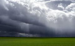Tormenta (pinusylvestris) Tags: naturaleza agua water d7500 nikon sigma 1770 contemporary storm tormenta lluvia prado verde green