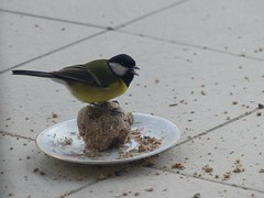 Cagnottre, Landes, derrière le double-vitrage et en zoomant tant les oiseaux sont farouches (Marie-Hélène Cingal) Tags: cagnotte 40 landes