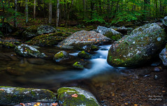 "Whispering Waters (Ron Harbin Photography) Tags: gsmnp landscape fx outdoor f28 24mm d750 nikon copyright color yellow red black blue green orange tree trees leaves leaf lightroom diffused light sunshine shade natural depth field pictures spring summer autumn fall winter 2017 2018 flower grass escape fairytale wonderland forest ""natural light"" photographer golden hour travel sun prime primes water stream torrent flood river rock boulder covered moss park national mountains smoky great frame full"