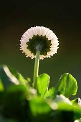 Blümchen... (st.ri1) Tags: blossom blütenstiel blume blumenbokeh tamron90mm tamron90mmmacro tamron sonya6300 sony lichtspiel licht sonne flowers flora