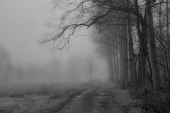 sentieri (mat56.) Tags: paesaggi landscapes landscape paesaggio campagna countryside footpaths sentieri alberi trees nebbia fog misty bianco black nero white sancolombanoallambro milano lombardia pianura padana antonio romei mat56