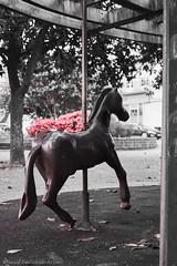 Carousel (Marco le Méro) Tags: brest finistère bretagne france europe nikon d5300 tamron sp 35mm f18 di vc usd portrait sculpture flowers park parc winter hiver city ville streets rues pink rose bw nb noiretblanc noir et blanc black white blackandwhite flickr outside extérieur