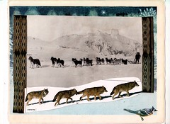 February (Joanna Key) Tags: collage sleddogs wolves bluejay snow winter animalart animals