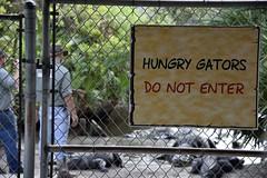DSC6827 (Starcadet) Tags: orlando alligator krokodil gator gatorland florida glades sumpf zoo hunger tiere fressen nilkrokodil aufzuchtstation