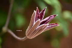 Every picture is worth a thousand words (heikecita) Tags: makro macro plant pflanze natur nature nikon d7200