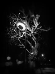 look at me, Son! (wakax) Tags: timisoara tm winter tree street light eye cyclop streetlamp ufo ozn romania