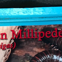 (h2kyaks) Tags: butterflyworld bugzoo millipede
